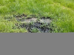 Sewage backing up on drainfield